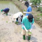 hanoi wet rice cultivation tour with kids