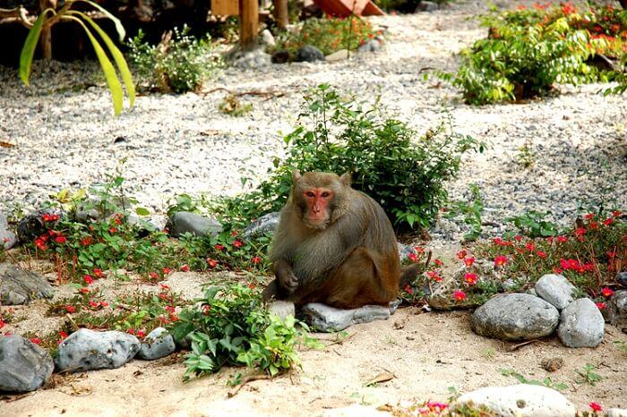 Monkey island Lan Ha bay