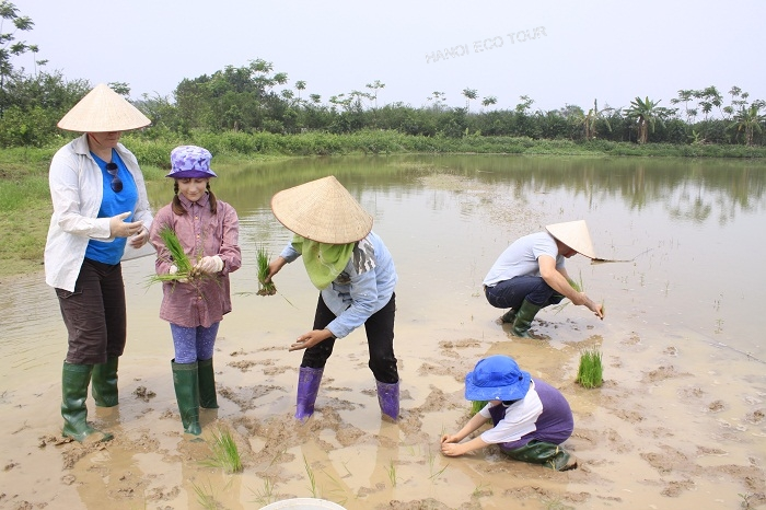rice transpranting hanoi eco tour