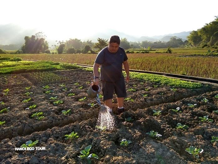 Farming works in Mai Chau - Awesome thing to do in Mai Chau