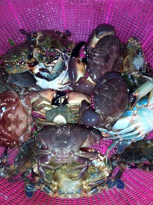Seafood in Thanh Lan island