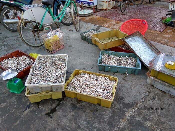 Coto island seafood