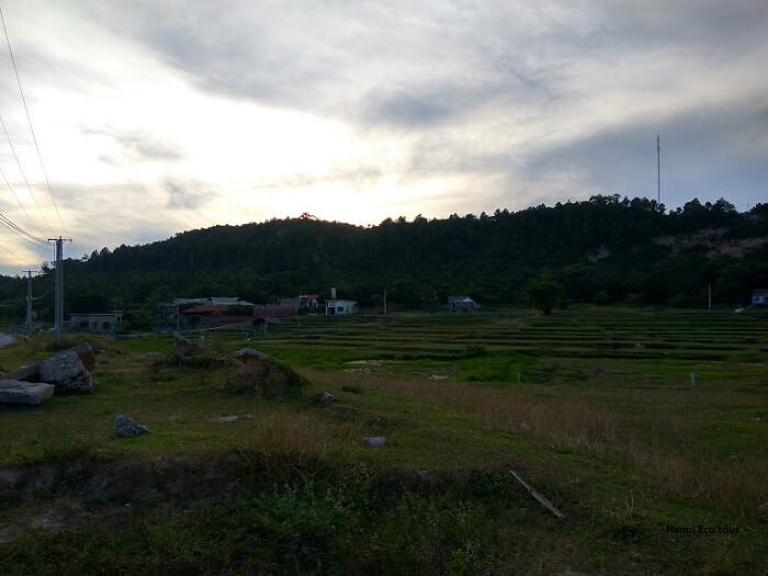 rice field quan lan island off the season