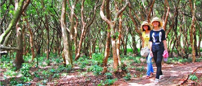 Minh Chau forest