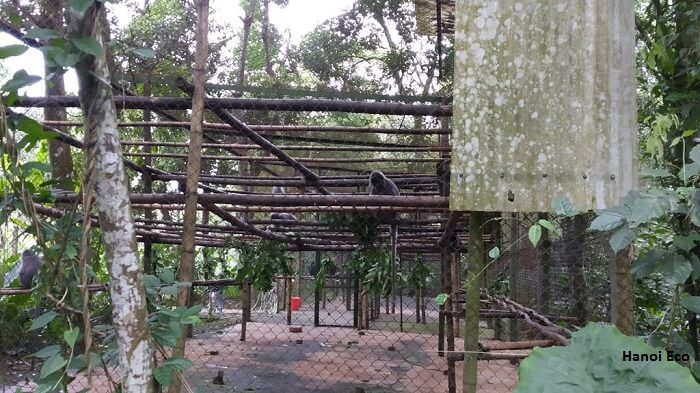 Endangered Primate Center, Cuc Phuong national park