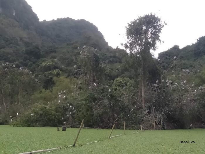 Thung Nham Bird Garden in NInh Binh