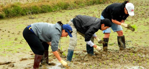 Wet rice growing tour