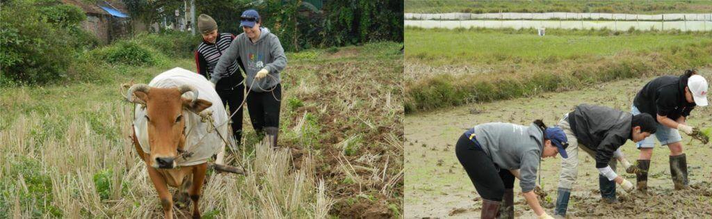 wet rice growing tour 1024x315 1