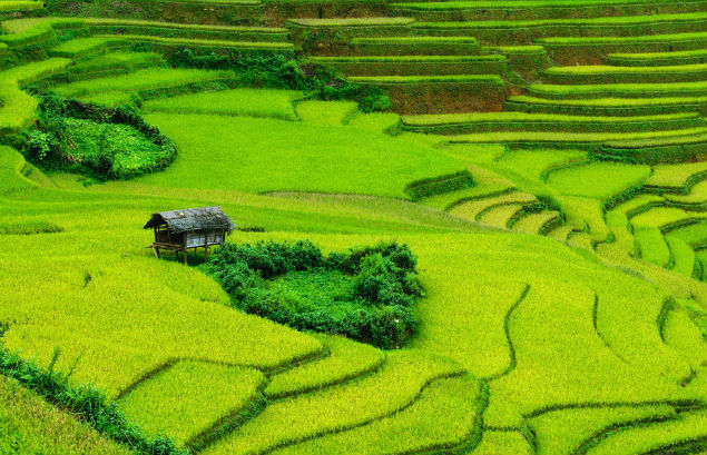 terrace-paddy-field-in-mai-chau